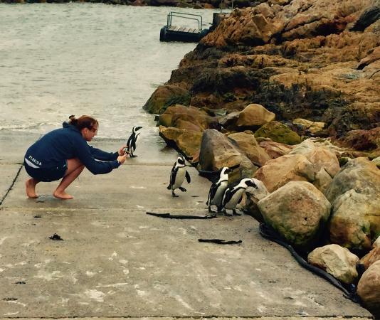 Cape Agulhas Tour penguins at stoney point