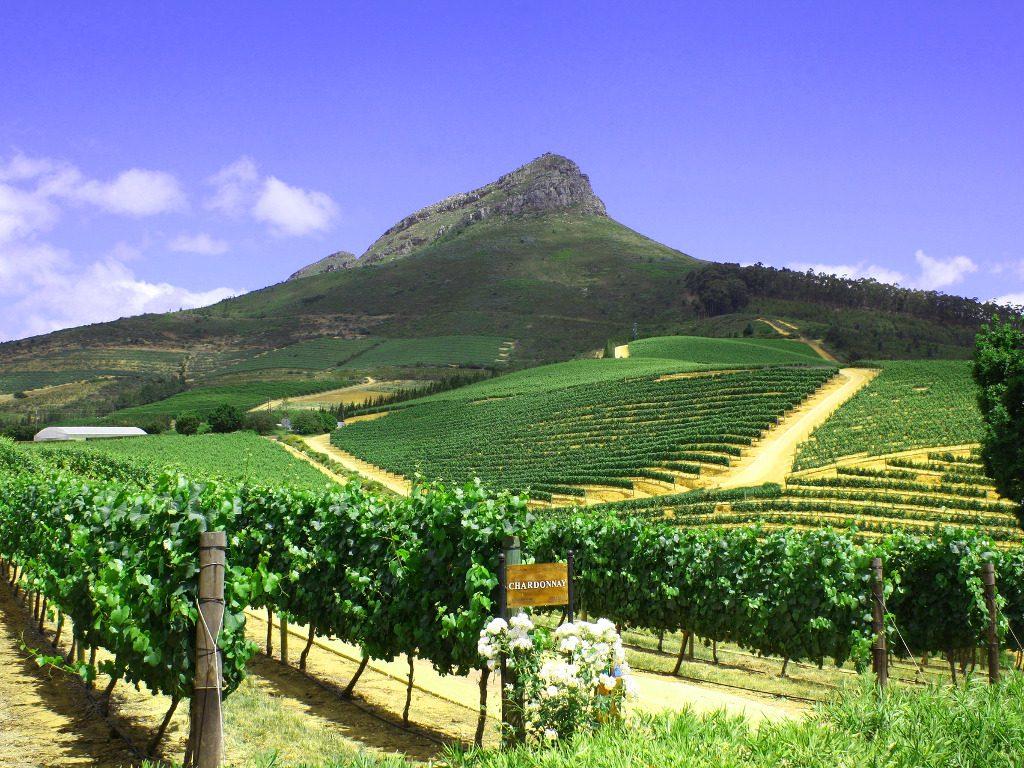 Cape Winelands tour vineyard