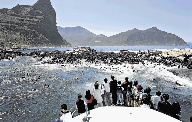 Hout Bay Seal Island boat trip on Cape Point Tour
