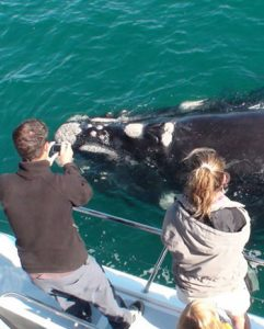 whale watching tour boat trip