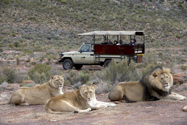 Aquila early morning safari