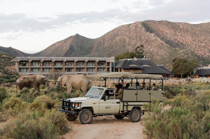 aquila combo safari