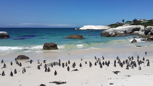 Top-10-Reasons-to-Visit-Cape-Town-Beaches