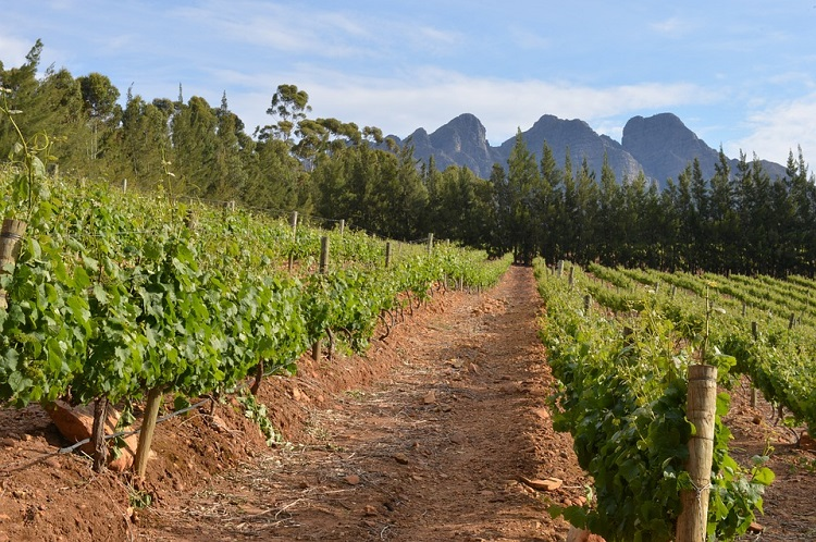 Top-10-Reasons-to-Visit-Cape-Town-Wine-Farms