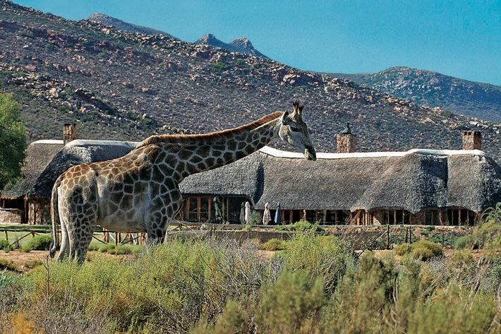 Aquila Private Game Reserve Safari Full Day