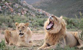 African Safari in Cape Town