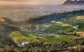 constantia wine valley
